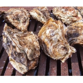 """[notice] """"Meat oyster hut"""" Tuesday, January 15, 2019 opening!"""